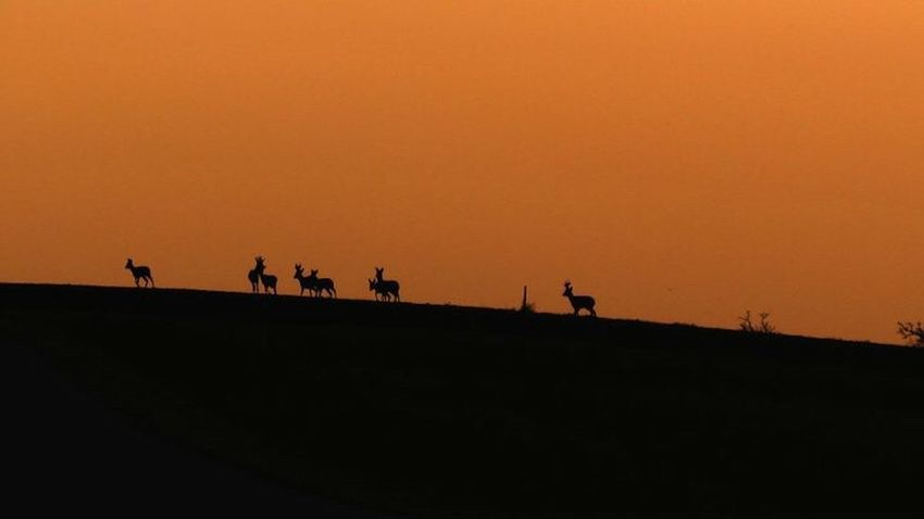 Animals Animal Themes Sunset Silhouette Outdoors Photo #photos #pic #pics # #picture #pictures #snapshot #art #beautiful #instagood #picoftheday #photooftheday #color #all_shots #exposure #composition #focus #capture #moment Heer 🦌😍