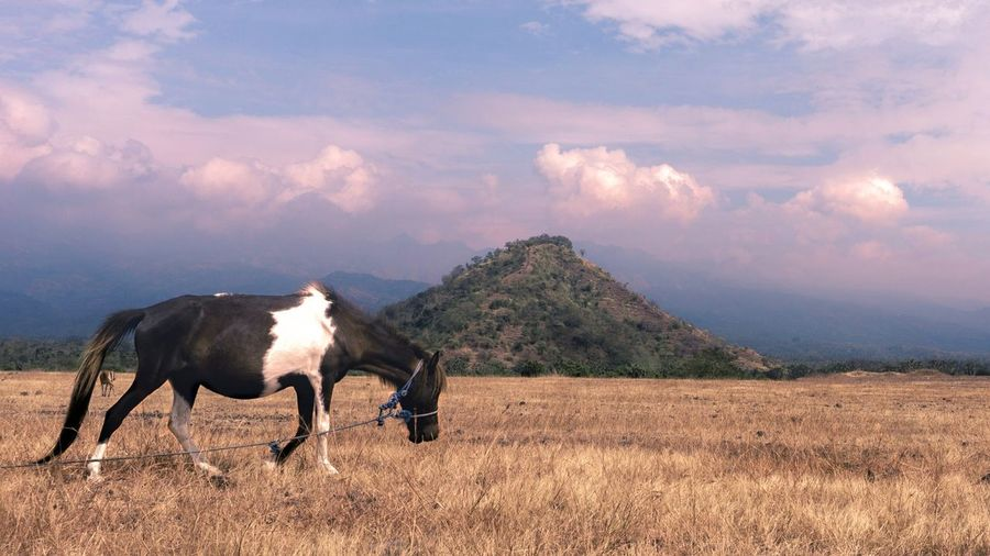 Jaran Goyang Mountain Agriculture Rural Scene Tree Farmer Sky Horse