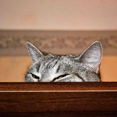 😸 хитрая кошка нашкафу подглядывает cat catoftheday photo instaphoto instacat photooftheday kitty catsofinstagram catstagram instagramcats instagood meow cutecatsofinstagram