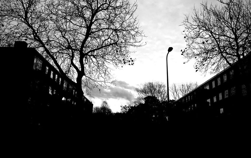 In the City Cityscapes Traveling Sunrise Silhouettes Houses Lantern Gettingdark Goinghome Trees People preparing Dinner Inside Blackandwhite Photography Blackandwhite Sky_collection