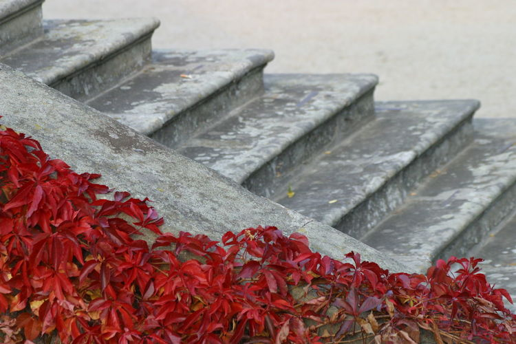 Autumn Autumn colors Autumn Leaves Fall Colors Parthenocissus Parthenocissus Quinquefolia Stairs Stairway Victoria Creeper Change Concrete Day Fall Fall Leaves Grey Leaf Leaves Nature No People Outdoors Plant Plant Part Red Staircase Virginia Creeper
