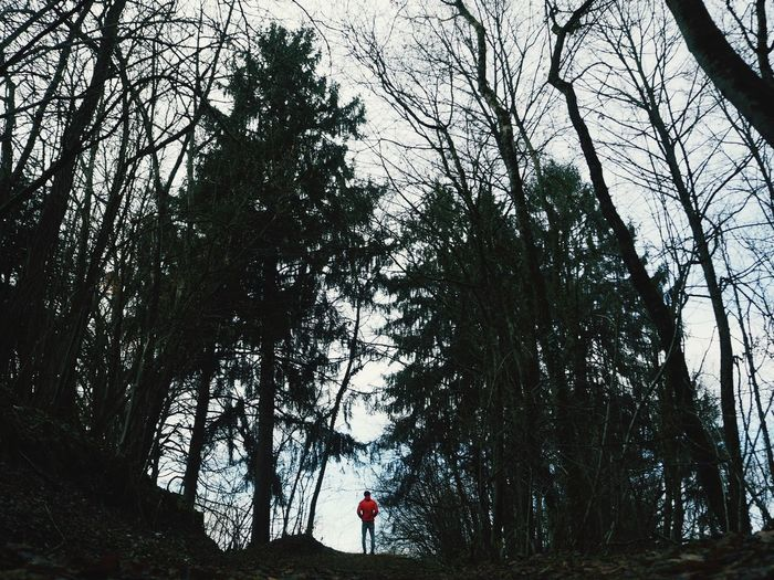 Standing Look Forward Pic Forest North Italy EyeEm Gallery Tree Low Angle View Silhouette People Adult Adults Only Day One Person Outdoors Men Real People One Man Only Nature Sky