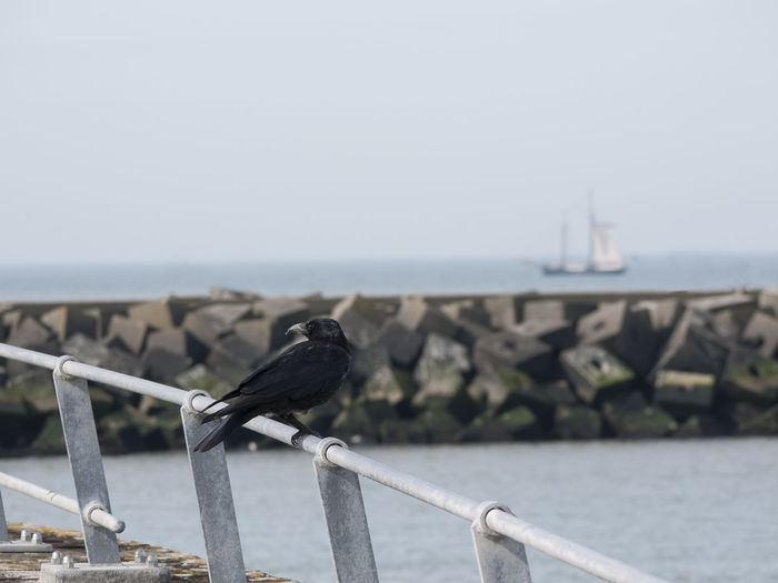 Crow says farewell Bird Crow Depth Of Field Farewell Focus On Foreground Goodbye Leaving Sailing Away Sailing Boat Sailing Ship Sea And Sky Seaside Ship Ship In Distance Travel Telling Stories Differently Calm Live For The Story Lost In The Landscape
