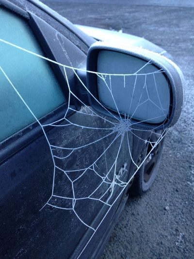 Cobweb In The Frost Cold Temperature Today's Photos