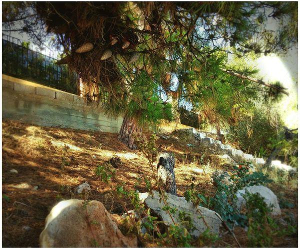 Greece Salamina Trees Rocks Nature Dirt Stairway Flowers