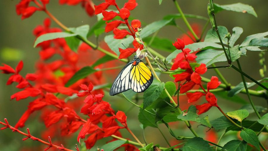 Butterfly on red flowering plant