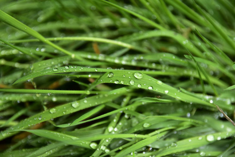 Close-Up Of Water Drops On Grass During Rainy Season