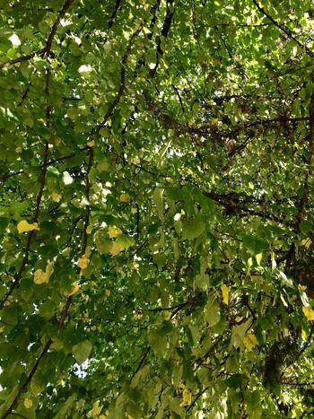 Foglie Tree PhotoManiac Green ??✌️