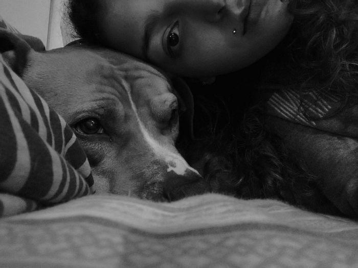 Dog Domestic Animals Pitbull Love Dogmodel Dog Photography Eye Beauty Sweet Moments