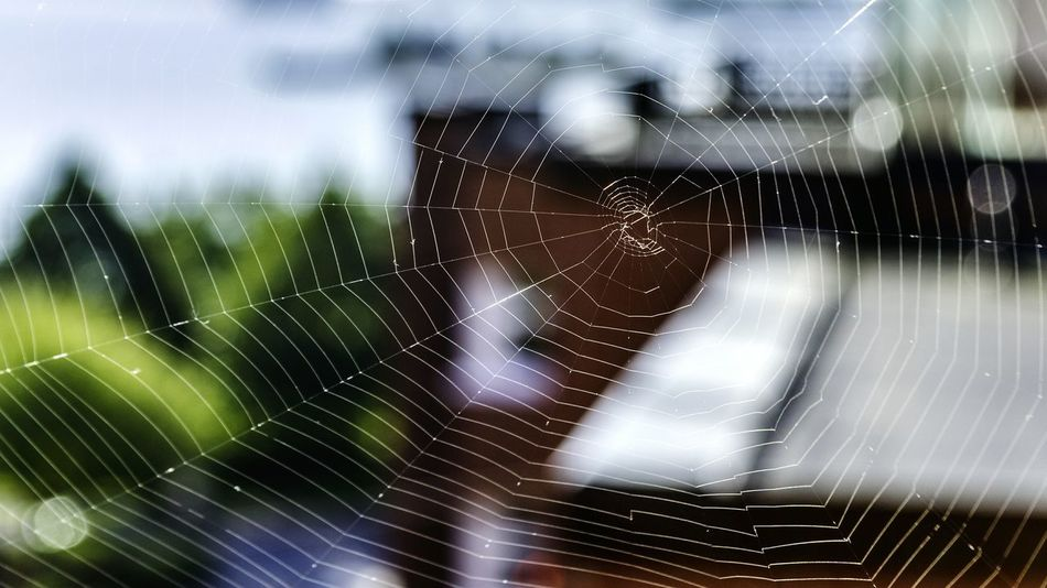 Precision Precise Intricate Ordered Spider Web The View From My Window Spiderweb Helsinki Finland Katajanoka