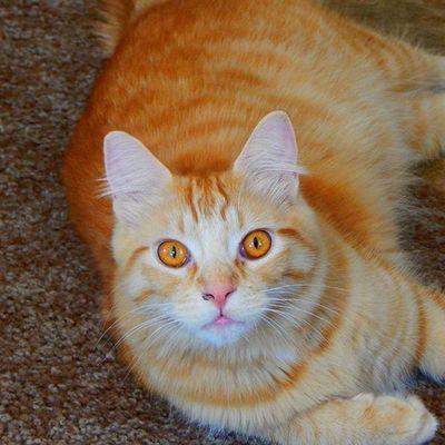 Mrlito MySweetBoy Wontletmomgethisboogers Gingercat
