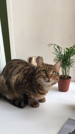 Portrait of cat sitting on potted plant at home