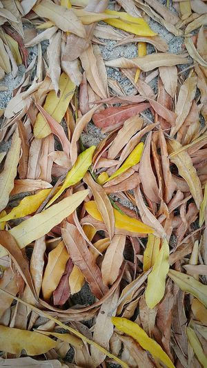 fallen leaves Leaves Fallen Leaves Dryed Leaves Backgrounds Full Frame Close-up Plant Life Natural Pattern