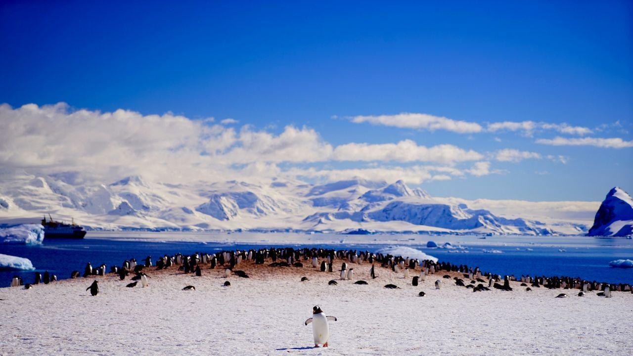 Panoramic view of penguins on sea shore against sky during winter