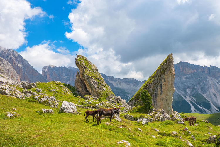 View of a horse on landscape against cloudy sky