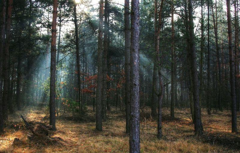 Lights Forest