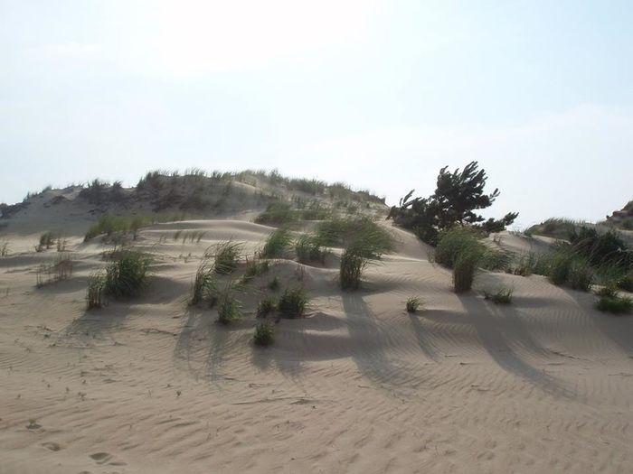 Sand Outer Banks, NC Dunes Coastal Feature Seascape Coast Coastline Shore