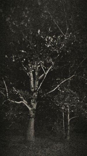 Learn & Shoot: After Dark South Georgia Moonlight Oak