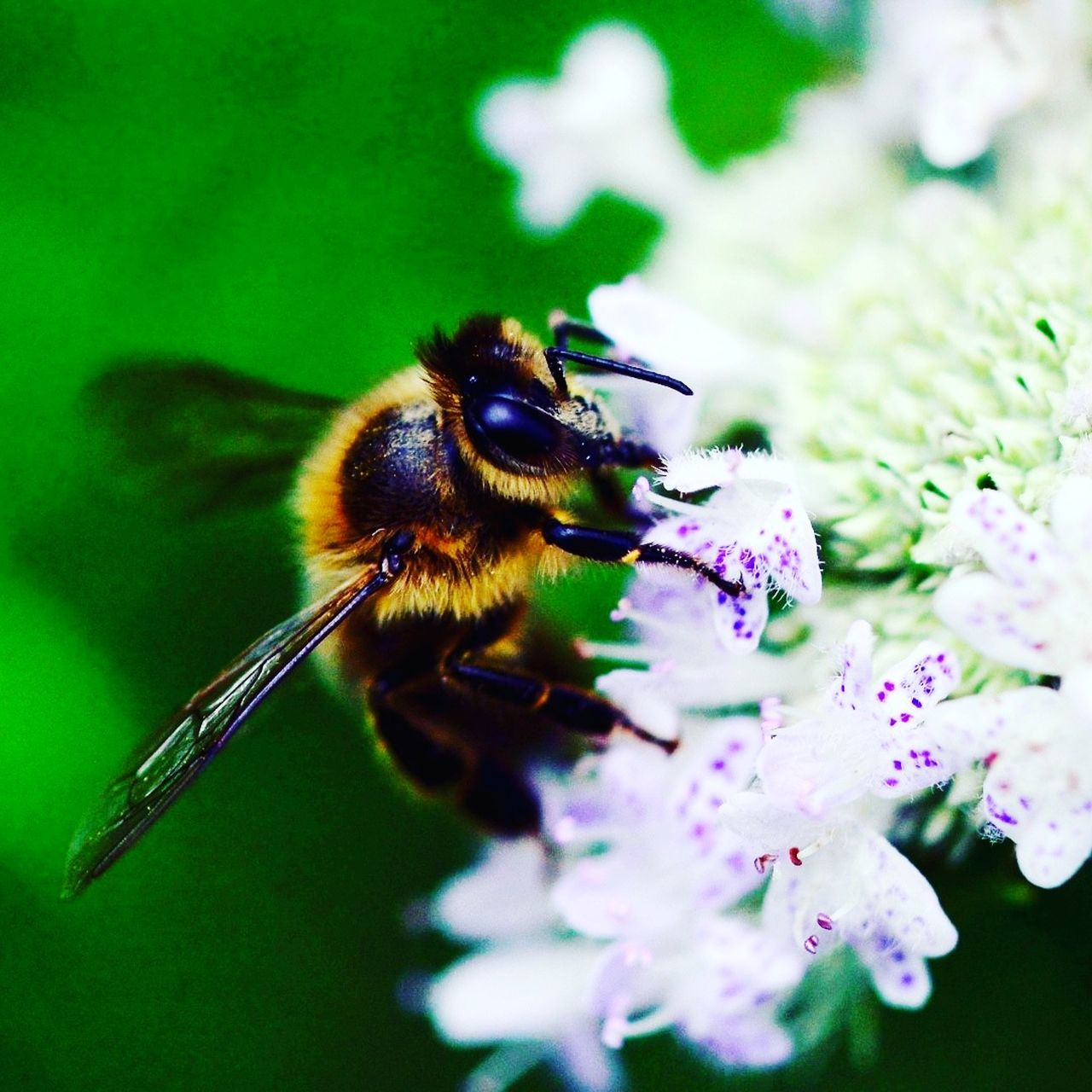 flower, insect, one animal, animal themes, animals in the wild, nature, beauty in nature, fragility, no people, freshness, close-up, day, growth, outdoors, bee, flower head
