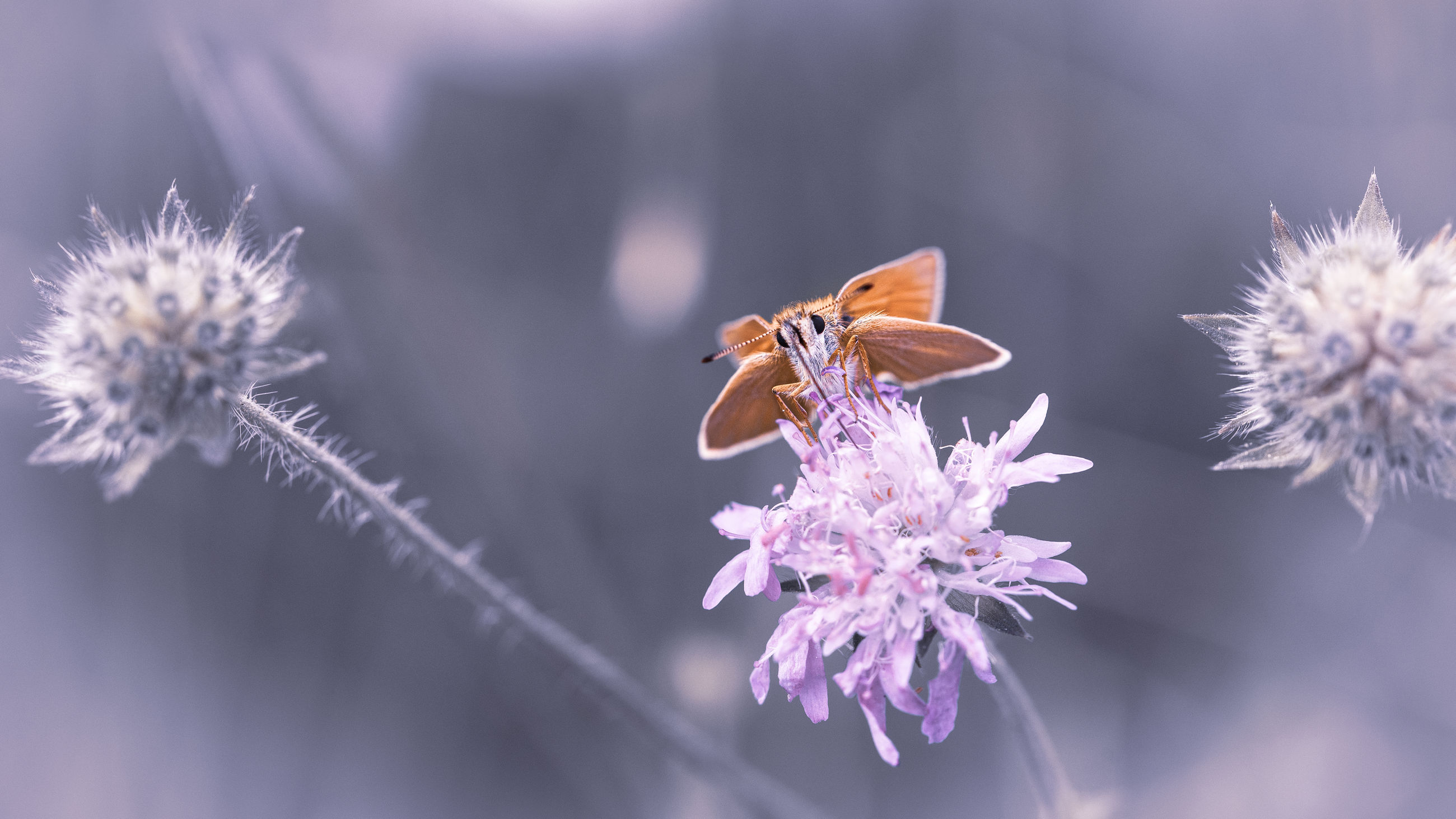 flowering plant, fragility, flower, vulnerability, plant, beauty in nature, insect, freshness, invertebrate, close-up, flower head, petal, one animal, nature, animals in the wild, inflorescence, pollination, growth, animal themes, animal, no people, outdoors, purple, pollen