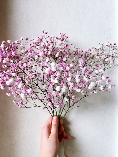 flower Home Flower Human Hand Flower Human Body Part Pink Color One Person White Background Fragility