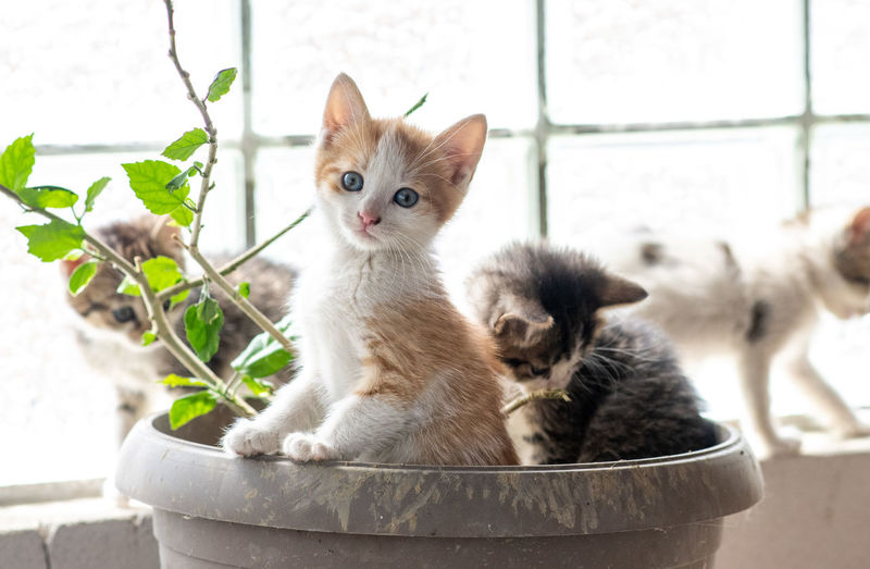 Portrait of kitten on potted plant