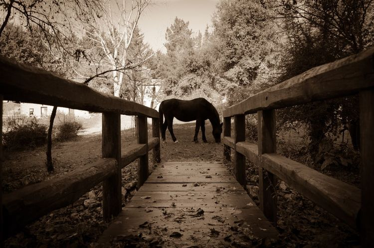 Horse Sicily Nikon Animal Themes One Animal Mammal Domestic Animals Tree Livestock Nature Animals In The Wild Forest No People Animal Wildlife Outdoors Standing Day Full Length Beauty In Nature