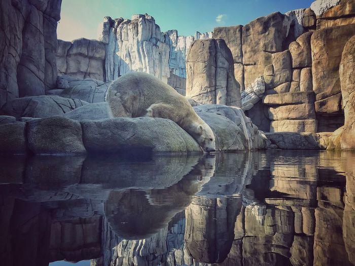 Ohne Eisbären wäre unsere Welt nicht unsere Welt 🌎 Architecture History The Past Built Structure Day Art And Craft Building Exterior