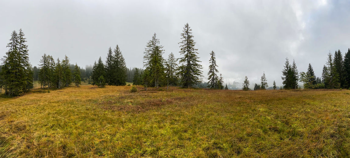 Panoramic view of pine trees on field against sky