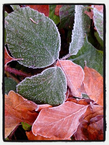Nature_collection Dezember Philosophenwald