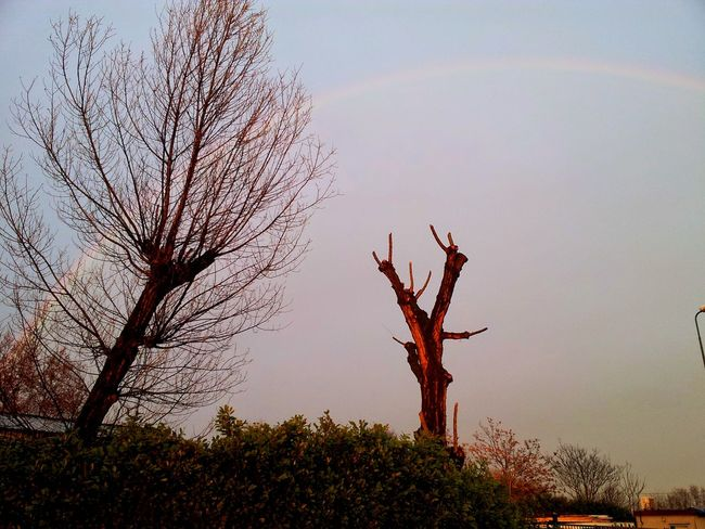 Tree Beauty In Nature Sky Rainbow Winter End After Rain