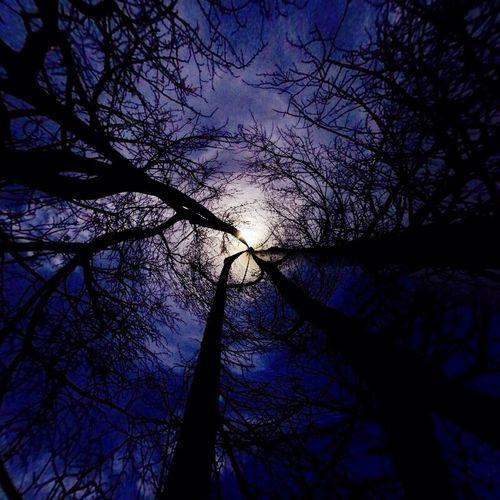 Notes From The Underground Dark Forest