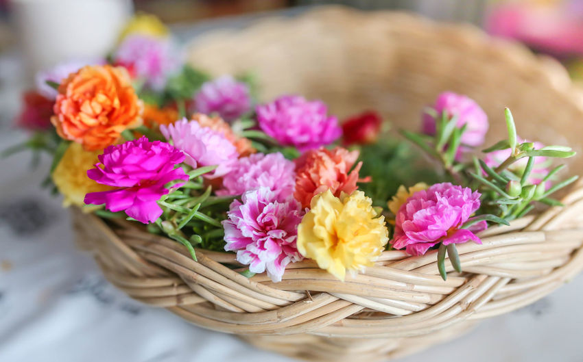 High angle view of pink flowers on table