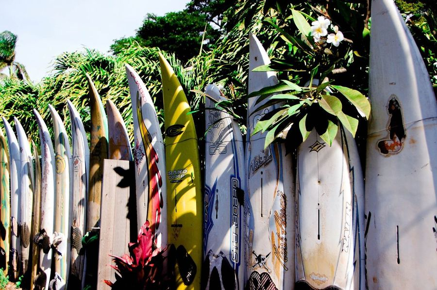The Wall of Surfs