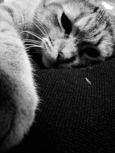 Domestic Cat Pets Domestic Animals One Animal Animal Themes Feline Mammal