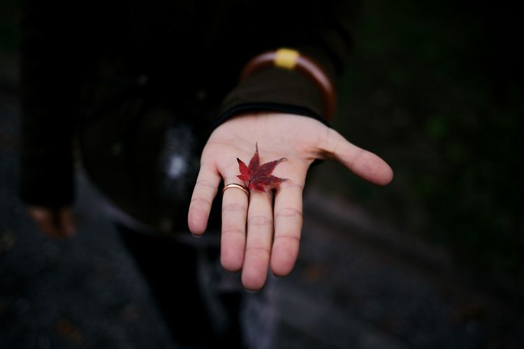 Cropped Image Of Hand Holding Maple Leaf