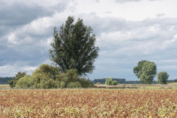 Scenic study of sunshine, clouds and trees. The picture is taken near Sint Kruis, a small village south of Oostburg. EyeEm Market © Agriculture Crop  Field Landscape Sky The Netherlands Tree Zeeland  Zeeuws Vlaanderen