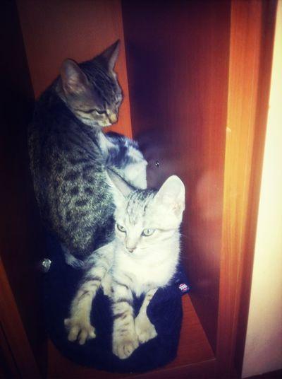 Pussycats Photo