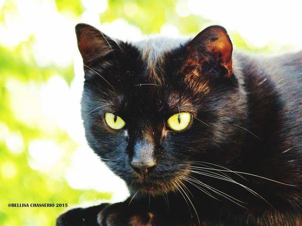 Kitty Cat Kitty Eyemcat Eyeemcats Eyeemcat