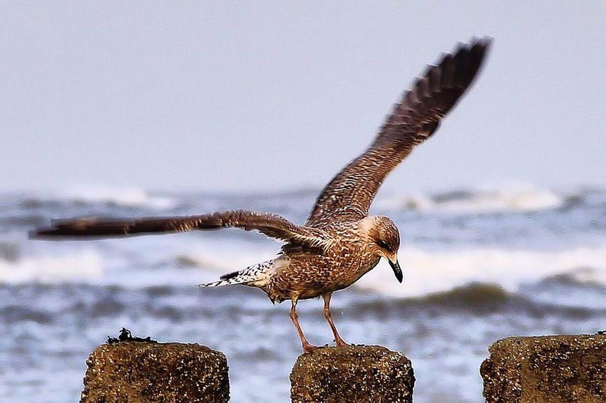 Nordsee Feeling🐚🌾 Nordseeküste Wangerooge Landing Bird Move Stormy Weather Cloud_collection  Waves, Ocean, Nature Clouds And Sky