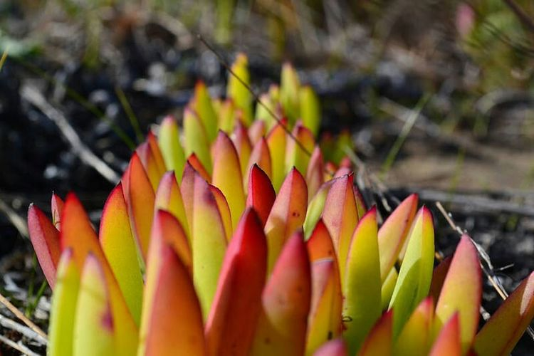 New Zealand Beach Nature Photography Plant Life Plant Photography Colors Colorful Colorsplash Beach Nature Beach Plants Red Yellow Green Colors Of Summer Bokeh My Kind Of Flower Wallpaper