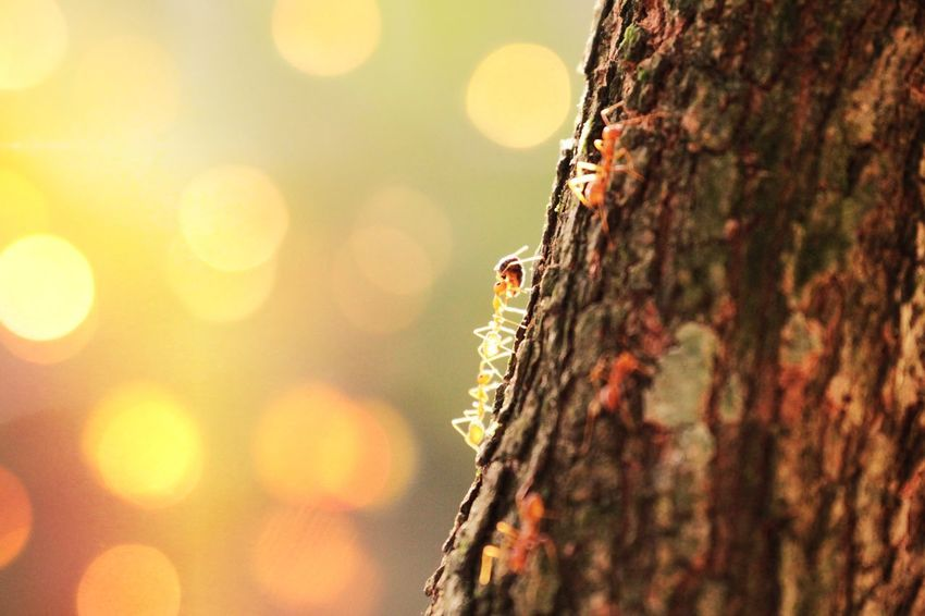 EyeEm Best Shots India Life Sunlight Animal Themes Animals In The Wild Ant Bark Climbing Close-up Day Focus On Foreground Fungus Insect Kerala Lichen Nature No People Outdoors Rough Selective Focus Textured  Tree Tree Trunk Wood - Material