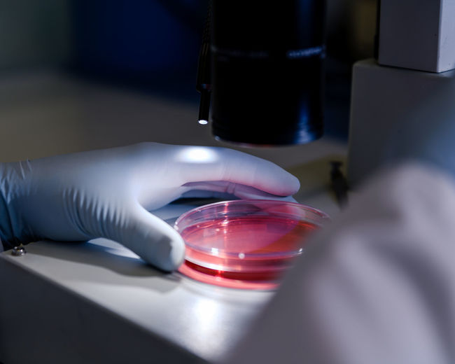 Cropped hand of scientist holding petri dish on table