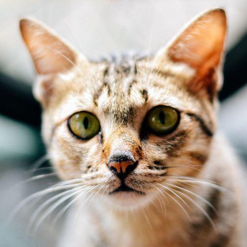 Domestic Cat Domestic Animals Looking At Camera Pets Portrait Close-up Animal Themes Cats Of EyeEm Cat Catsagram Cat Photography Animals Pet Portraits Meaow! Feline One Animal Outdoors Snapshot Movement Film Photography Film
