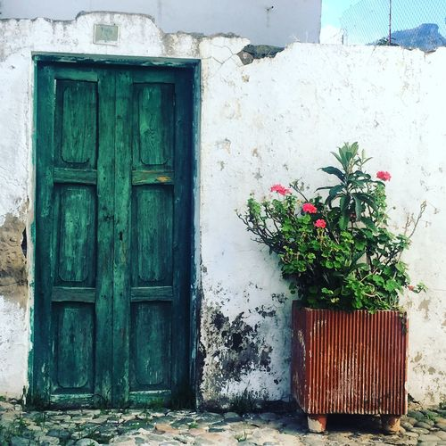 Through The Door Flower Built Structure Plant No People Building Exterior Growth Outdoors Day Nature Architecture Close-up Fragility Gran Canaria Gran Canary Island