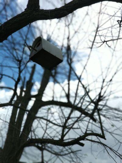 Bird Tree Branch Bare Tree Winter Cold Temperature Snow Sky Go Higher