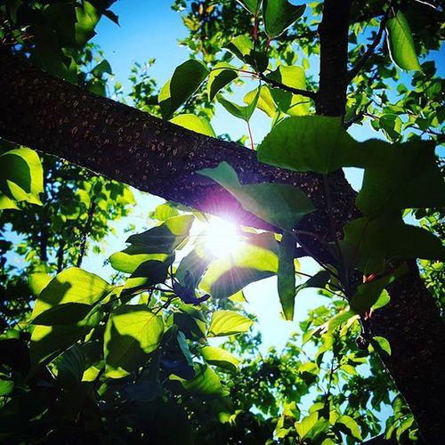 Sun Sunbeam Tree Sky Leafs Green Blue Nicecolors Freshair