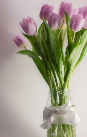 Pink tulips in vase against wall at home