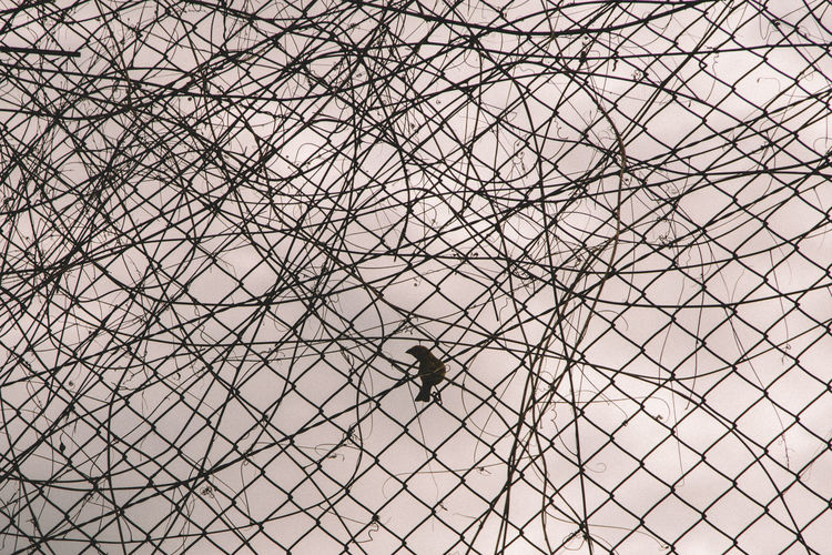 Animal Behavior Animal Themes Animals In The Wild Awaiting Back Lit Beauty In Nature Bird Chainlink Fence Day Fence Low Angle View Nature One Animal Outdoors Perching Sad Scenics Silhouette Sky Tranquil Scene Tranquility Wildlife Zoology Adapted To The City