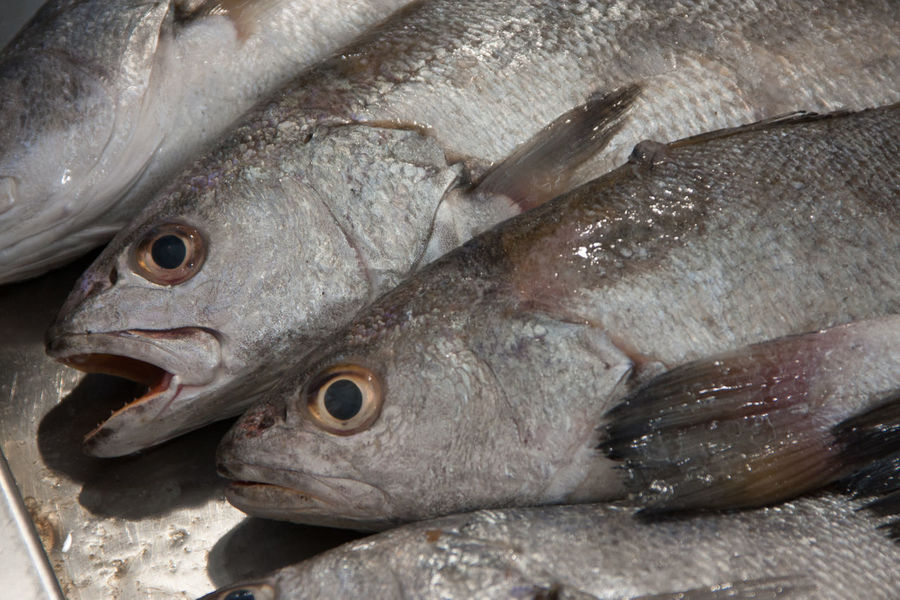 Animal Themes Close-up Cold Temperature Day Fish Fish Market Food Food And Drink Freshness Healthy Eating Ice Market No People Outdoors Raw Food Seafood